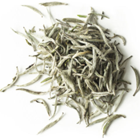 FUDING SILVER NEEDLE WHITE TEA